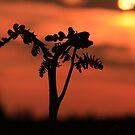 Spring Fern at Sunrise by Martin Griffett