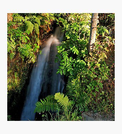 Wayside Cascade Photographic Print