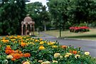 City Park, Launceston. by BRogers