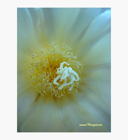 Floral Fusion Photographic Print