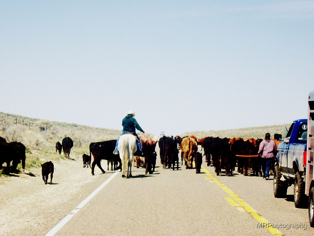 Moving the Herd by MRPhotography