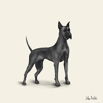 Great Dane Drawing in Black Digital Ink by ibadishi
