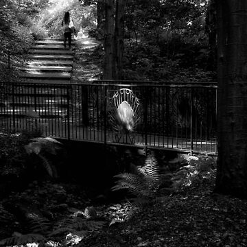 Walking the dog in Pittencrieff Park by 242Digital