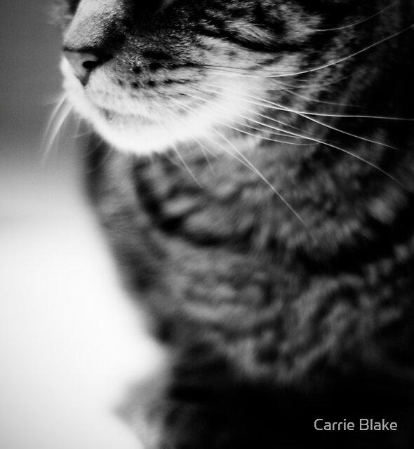 . c a t a g e . by Carrie Blake