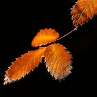 Autum Leaves by Sue Martin