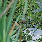 Fly Little Watcher by dougie1