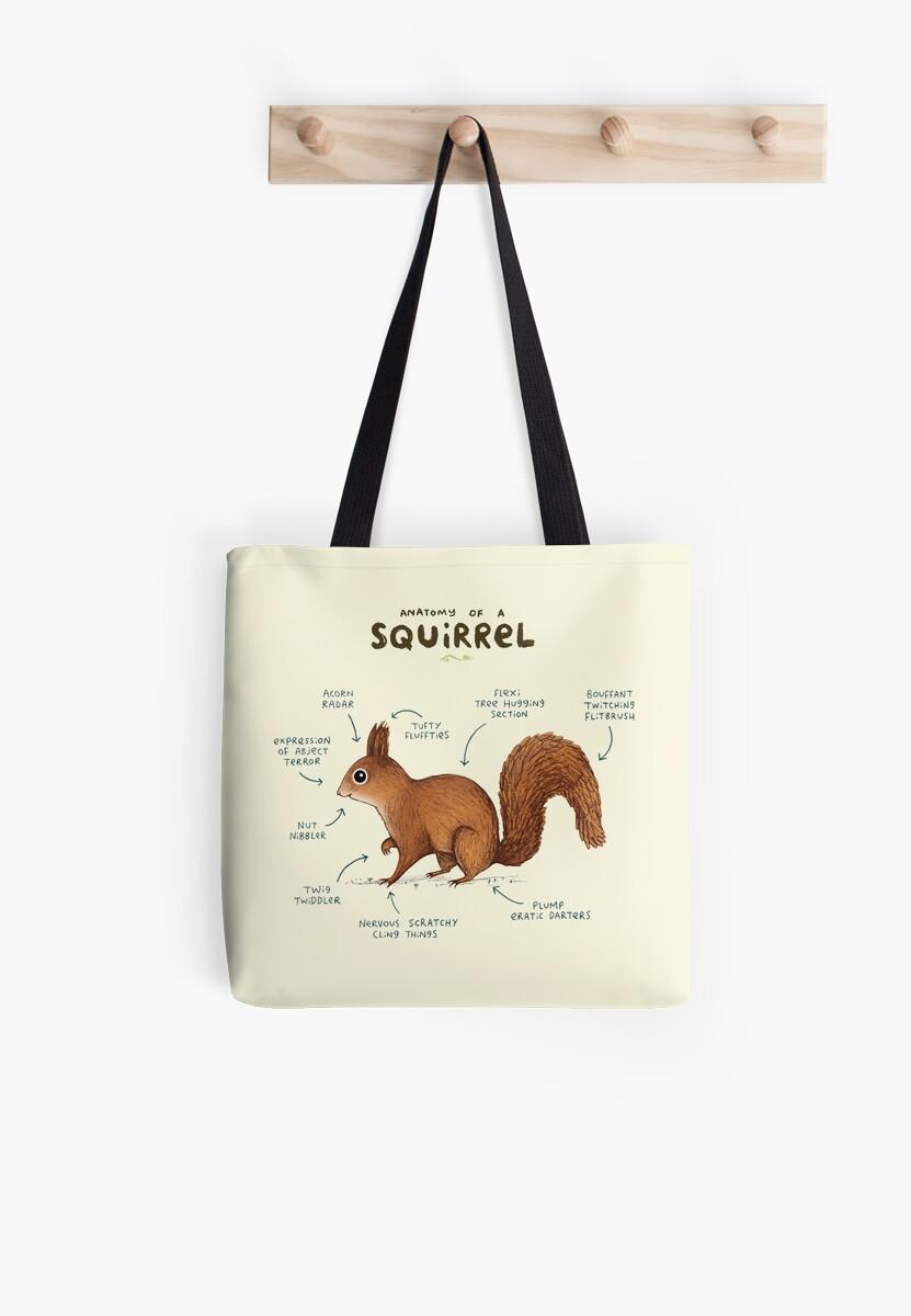 Anatomy of a Squirrel by Sophie Corrigan