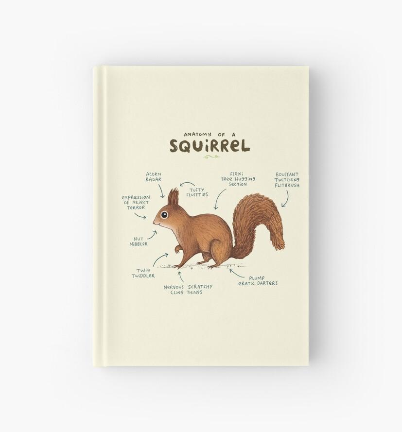 Anatomy of a Squirrel\
