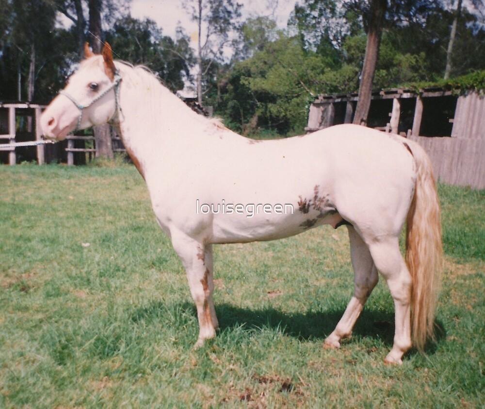Medicine Hat Stallion - Tonka by louisegreen