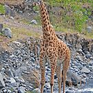 Look at Me! Arusha National Park, Tanzania, Africa by Adrian Paul