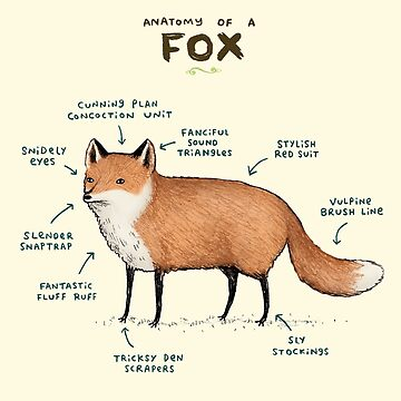 Anatomy of a Fox by SophieCorrigan