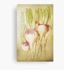 Turnips Canvas Print