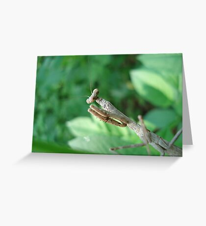 Get your own leaf! Greeting Card