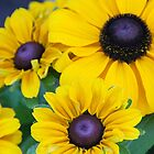 Family of Susans! by Heather Friedman