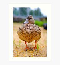 Duck, Duck...DUCK?! Art Print