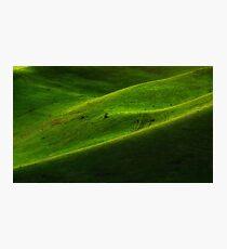 """Green Hills"" Photographic Print"