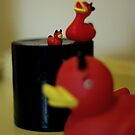 Evil Ducks! by dodgsun