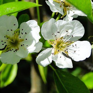 Apple Blossoms by JuliaAjandi