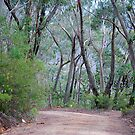 Road to Mexican Hat - Mt Wilson NSW by Bev Woodman