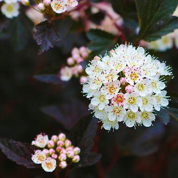 Flowering Diablo by JuliaAjandi