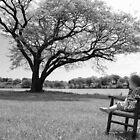A quiet place.... by mekea