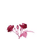 Beautiful Red Roses on White Background. Love Yourself.  by Shelly Still