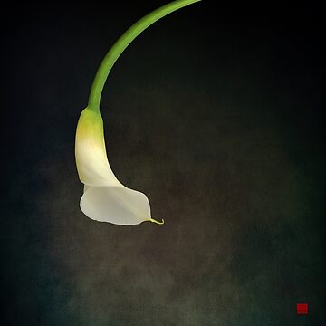 CALLA by tomb42