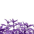 Epic Purple Long Vine Leaves Abstract Minimalist   by Shelly Still