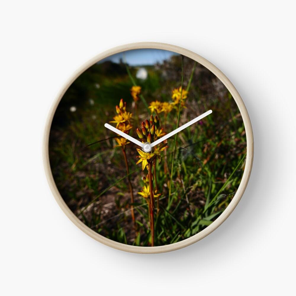 Bog Asphodel (Narthecium ossifragum) Clock
