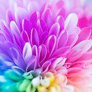 Rainbows by Bevlea Ross