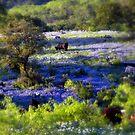 Grazing amongst the Bluebonnets, Texas by LeRoyM