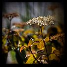 TTV Bokeh by Aaron Campbell