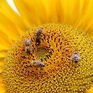 Vier Bienen 2 von LarryWintersohn