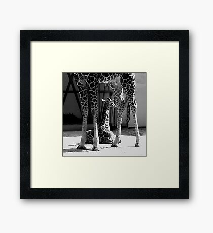 Niek and Dad - Close-up  Framed Print