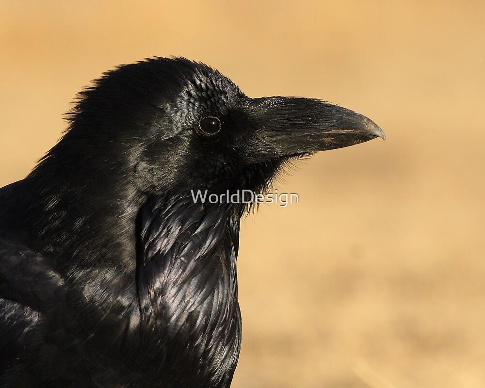 Sunset Raven by WorldDesign
