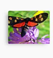 Cool black butterfly with red polka dots Canvas Print