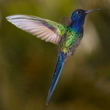 Hummingbird,  beautiful bird by VitorMacedo