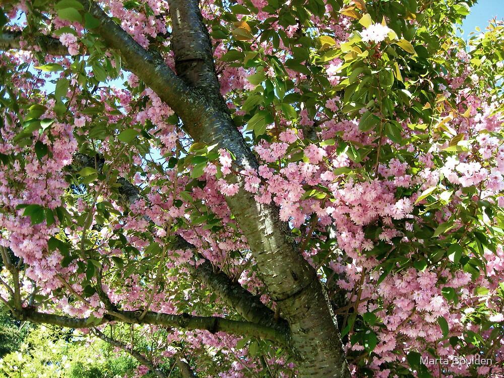 Cherry Tree by Marta Boulden