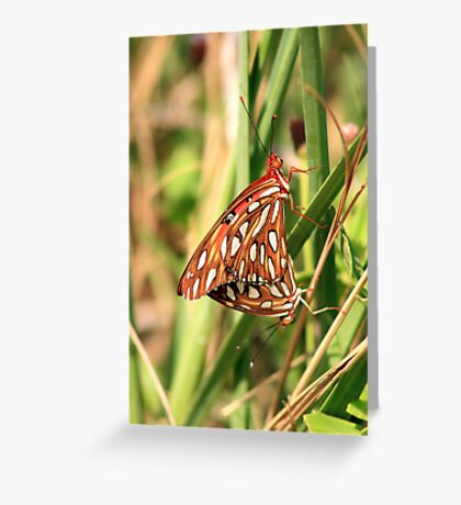 Natures Mating Dance Greeting Card