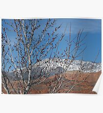 Spring Maple Tree Poster