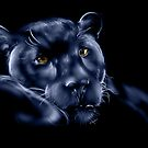 Midnight Panther by dimarie