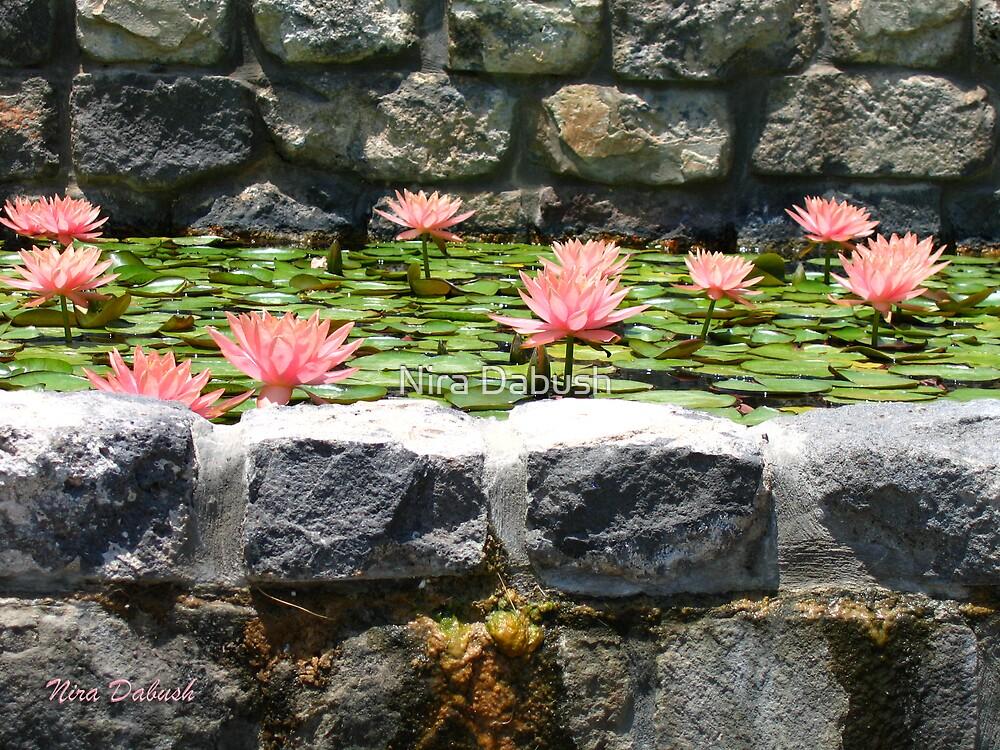 Waterlilies between the Stones by Nira Dabush