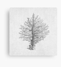 Grey Tree Coral Malerei Strand nautischen Island Beach Decor Metalldruck