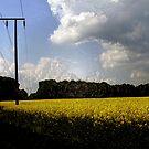 Field  by tonymm6491