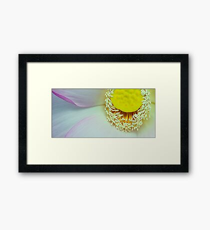 Anthers and petals of Lotus Framed Print