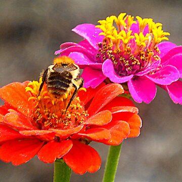 Bee & Zinnias by angel1