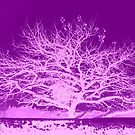 Purple Tree Inversion by ©The Creative  Minds