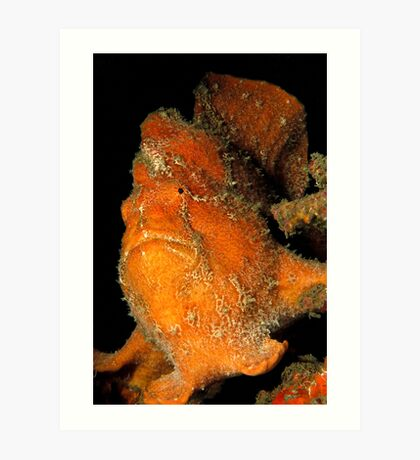 Orange Giant Frogfish Art Print