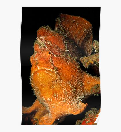 Orange Giant Frogfish Poster