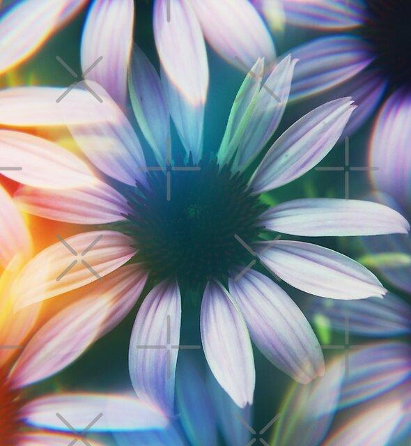 « Echinacée photographiée à travers un filtre à prisme » par Karin Elizabeth
